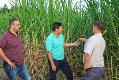 IFAI: BUSCAN AUMENTAR LA PRODUCCIÓN DE AZÚCAR RUBIO EN LA PROVINCIA
